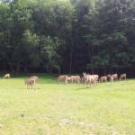 Safari Dvůr Králové nad Labem
