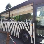 Autobus na Safari
