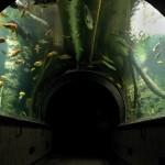 Obří akvárium Hradec Králové