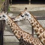 Zoo Olomouc zvířata