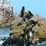 Islas Ballestas - lvouni