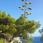 Cesta na Nugal beach Makarska