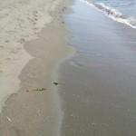 FKK kemp ADA BOJANA - procházka po pláži
